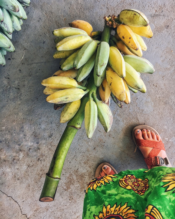 """These are called """"pata's"""" they're in the banana family, except smaller and sweeter. These came from the pata tree growing right in front of the school. :)"""